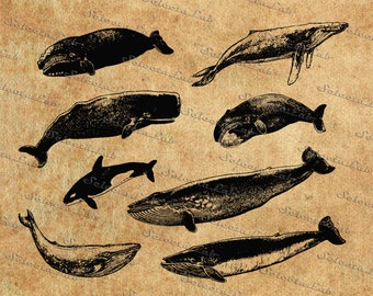 Digital SVG PNG whale, killer whale, sperm whale, humpback whale, sea monster,  vector, clipart, silhouette, instant download