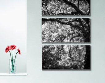 "Aluminum Wall Art of Black & White Tree Photography for a Triptych 20""w x 30""h"