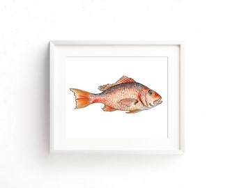 Red Snapper Watercolor Fine Art Print