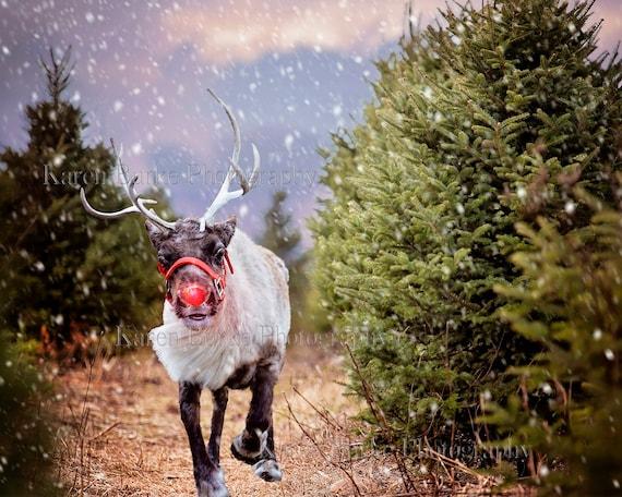 Real Reindeer Print - ...