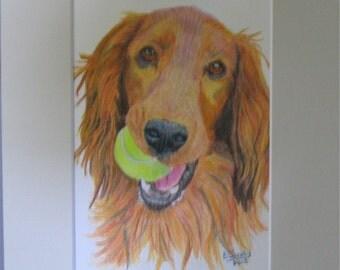 Reggie - colored pencil portrait 5 x 7, matted