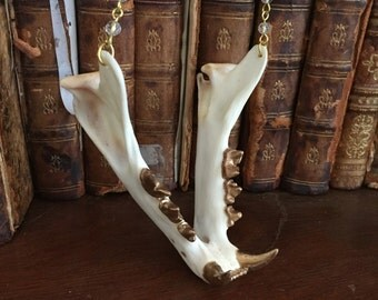 Gold Toothed Jaw bone Necklace