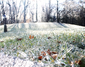 Icy Grass Photo Print; Grass Photography, Nature Photography, Winter Photography, Ice Photography, Snow Photogaphy, Winter || PHYSICAL PRINT