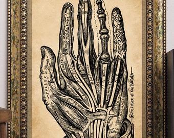 "Vintage Palmistry Art Print ""Structure of the Hand"" Sivartha 1901 Palm Reading Antique Book Illustration Steampunk Chiromancy"