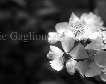 Flower Photograph