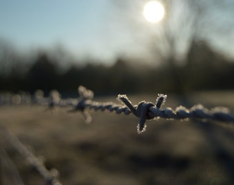 Barbedwire Rustic Fence Country Photography