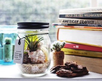 DIY Glass Jar Terrarium Kit with Air Plant