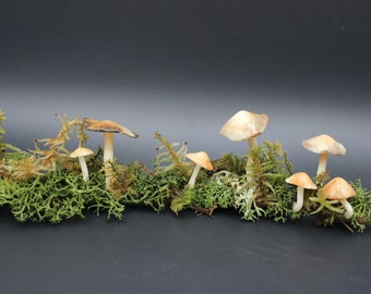Cold Porcelain Fungi and Stick