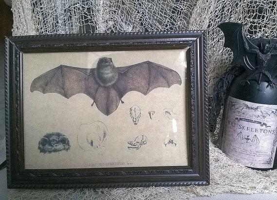 Vintage Scientific BAT Illustration Print Halloween Framed Print 5X7 Table Wall or Shelf Halloween Goth Steampunk Creepy Decor