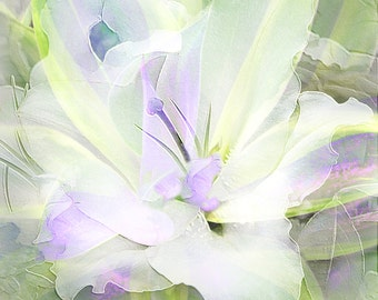 CAFIRLILY - DELICATE and Soft