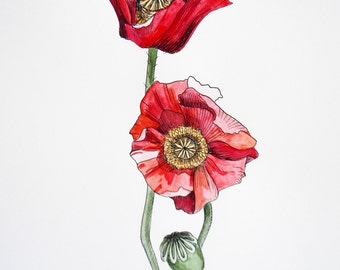 Poppy Art Print– Watercolor Painting– Pen and Ink Drawing– Botanical – Archival Art Print