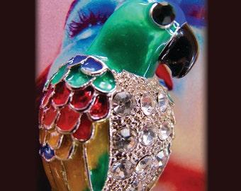 Caribbean Nights Parrot brooch