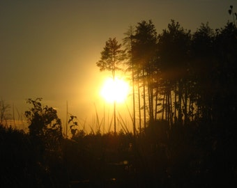 Sunset in the forest (nature of Ukraine)