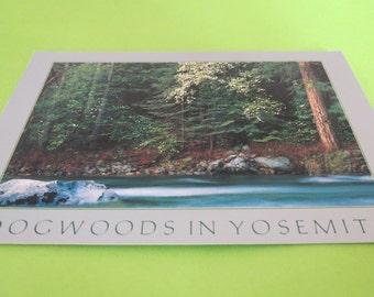 Dogwoods in Yosemite Postcard