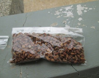 500 Voacanga Africana Seeds