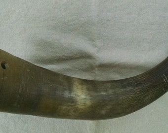 Antique Powder Horn c1800's Not Finished