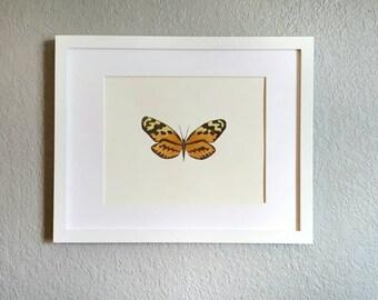 ORIGINAL Watercolor painting- Moth