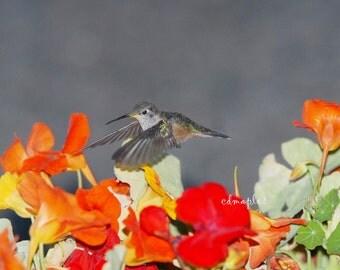 Hummingbird Photo, Card, Nature Photo, Wildlife Print, Bird Flying, Hummers