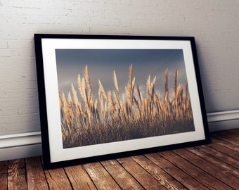 Pacific Sea Grass - Fine Art Print - 8x10 11x16, Landscape Photograph