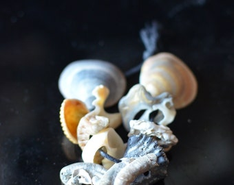 Charm shell 13