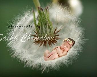Digital backdrop background newborn baby boy or girl dandelion