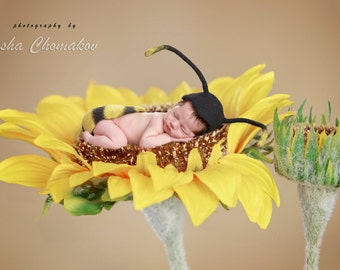 digital backdrop newborn baby girl sunflower  flower toddler