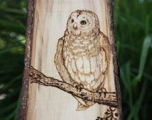 Tawny owl - handmade wood burned art