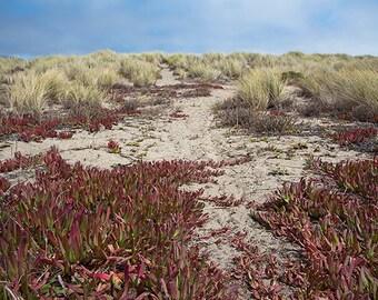 Approaching Doran Beach - shore photograph - pacific ocean sea art photography coastal sand california