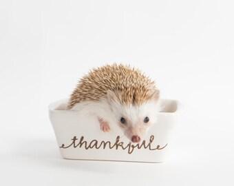 Thank you - Hedgehog Greeting Card