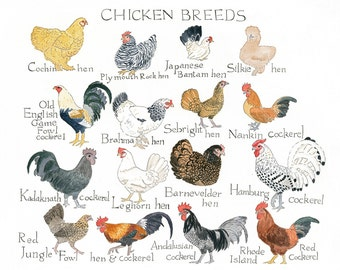 Art Print Chicken Chart