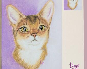 Beautiful Abyssinian cat