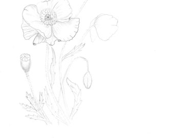 Coloring pages,