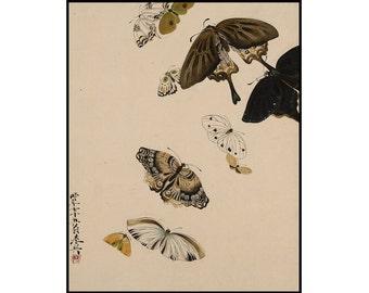 Butterfly Vintage Print - Japanese Butterfly - Butterfly Print - Japanese Vintage Print - Japanese Art - Shibata Zenshin - Digital Download