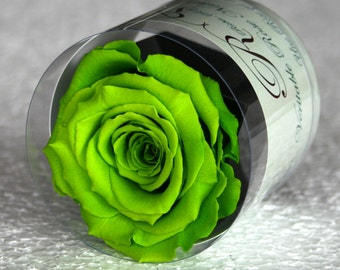Green stabilized eternal rose