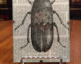 Black and White Framed Print Beetle