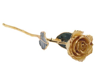24k Gold dipped Rose, Lacquered White Rose,