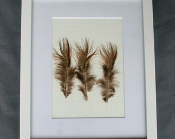 Real natural framed feathers. Ringneck pheasant cruelty free feathers. Wall art. Unice home decor.