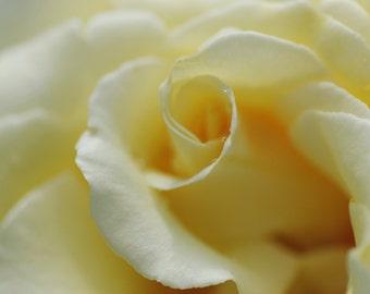 Horny Rose