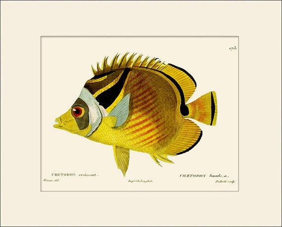 Vintage Fish Print #173, Art Print with Mat, Natural History Illustration, Beach House Wall Art, Nautical Art, Sea Life Prints, Wall Decor