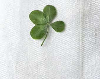 Real Four Leaf Clover - Laminated Wallet Card/Bookmark