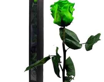 Preserved rose on stem