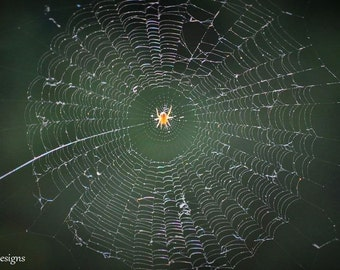 Entangled Spider | Photo on Canvas
