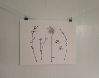 Original Seeds and Seed Pods Ink Drawing, Botanical illustration, Black and White Nature Drawing Illustration, 8 x 10