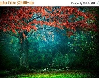 Summer Sale - Fairytale Photo, Autumn Foliage, Fog, Mist, Fall Photography, Nature Decor, Enchanted Forest, Magical Landscape, Colorful Phot