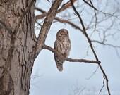 Barred Owl Photograph in Huntley Meadows Park Alexandria Virginia