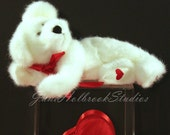 Three Boyds Bears Valentine's Day  4 x 6  Color Photo Note Card Envelope Cello Sleeve