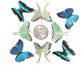 Micro Luna Moth & Butterfly Decorations
