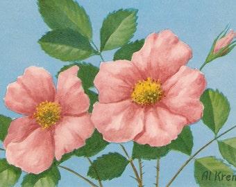 Vintage postcard,  Wild Rose postcard, artist signed Al Kreml vintage postcard, SharonFosterVintage