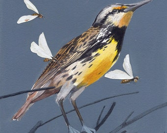 "Eastern Meadowlark - bird art print, 6"" x 6""."