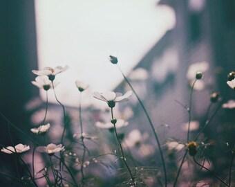 Nature Photography, Blue Floral Art, Cosmos Print, Botanical Print, Landscape, Dark Moody Photo, Home Decor, Wall Art, Flower Print, Dreamy